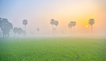 Đắm chìm vẻ đẹp nên thơ trên những cánh đồng lúa An Giang