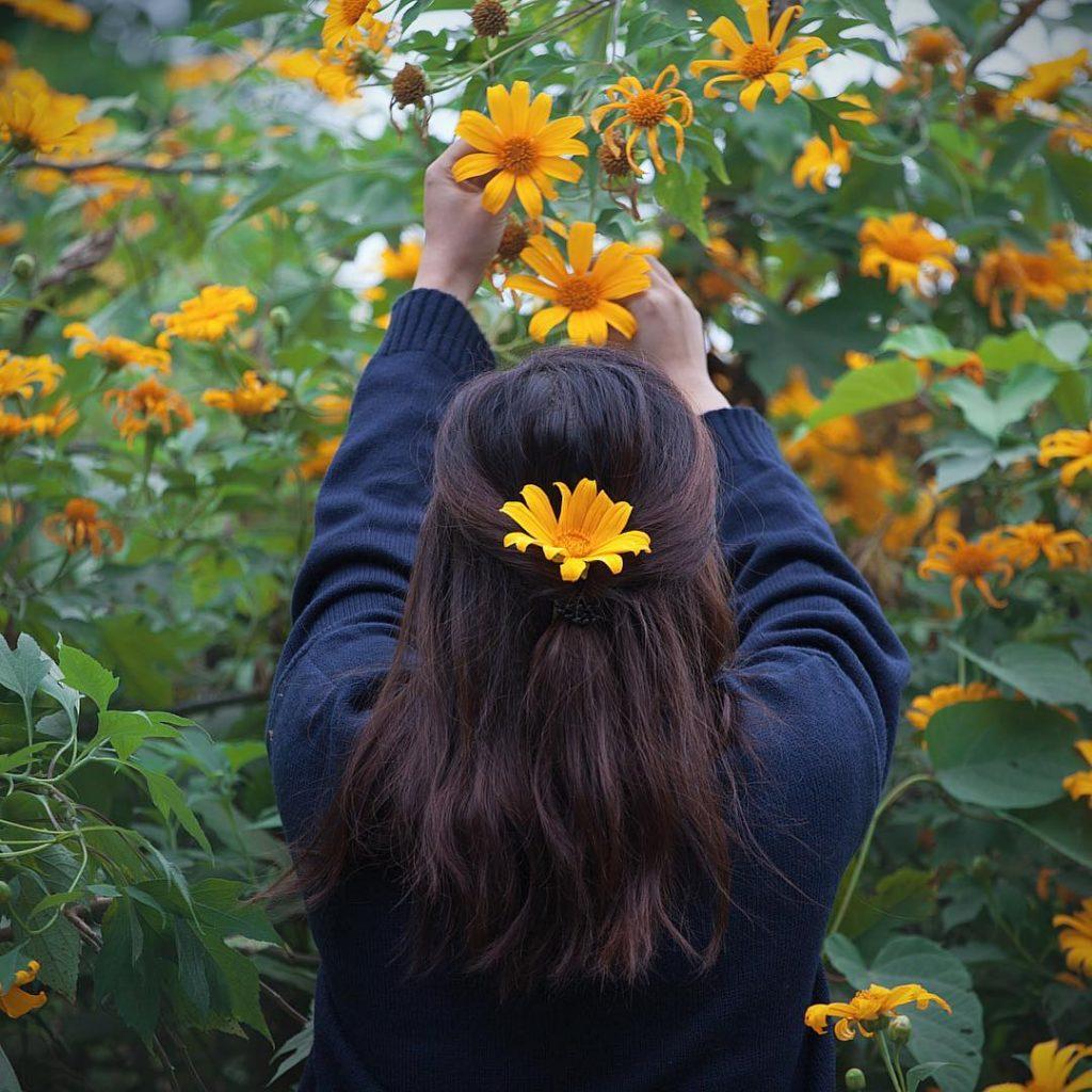 Du lịch Lâm Đồng- Các cung đường hoa dã quỳ là địa điểm check-