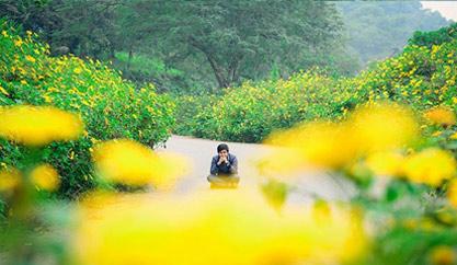"""""""Ngây ngất"""" với mùa hoa dã quỳ phủ sắc trên sườn núi Ba Vì"""