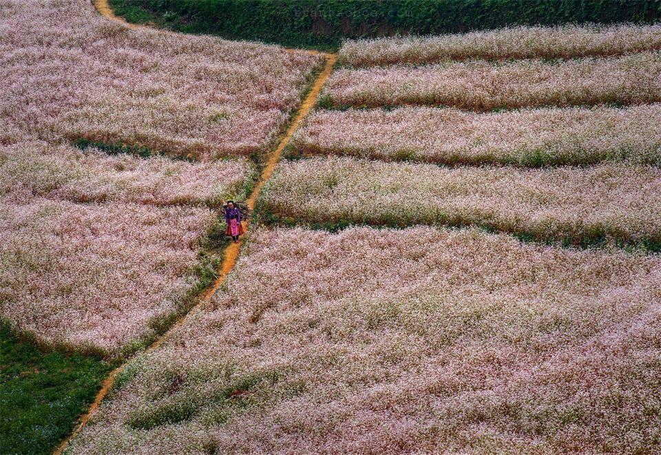 Du lịch Hà Giang- vẻ đẹp của những ngọn đồi ngập tràn sắc màu trắng, xanh, hồng, tím... Ảnh: Trần Bảo Hòa