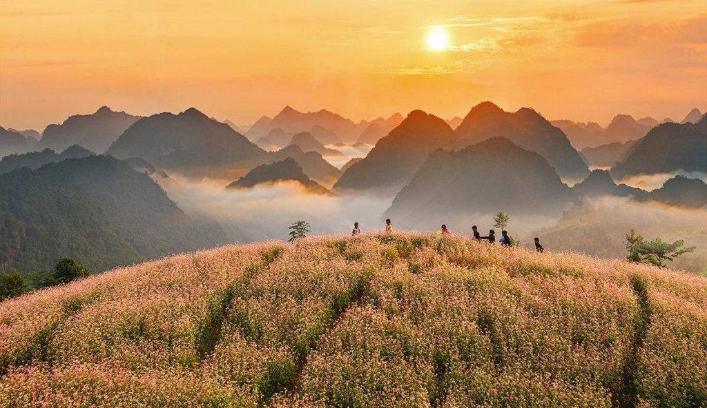 Du lịch Hà Giang- Hoa phủ sắc những ngọn đồi miền Tây Bắc tạo nên cảnh quan tuyệt vời mà ai đến đây đều mê mẩn. Ảnh: Trần Bảo Hòa