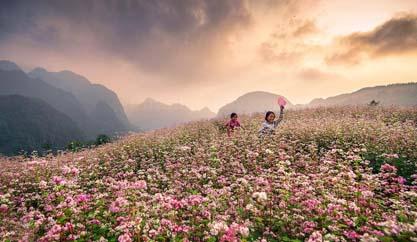Ngắm hoa Tam giác mạch tháng 10 Tây Bắc
