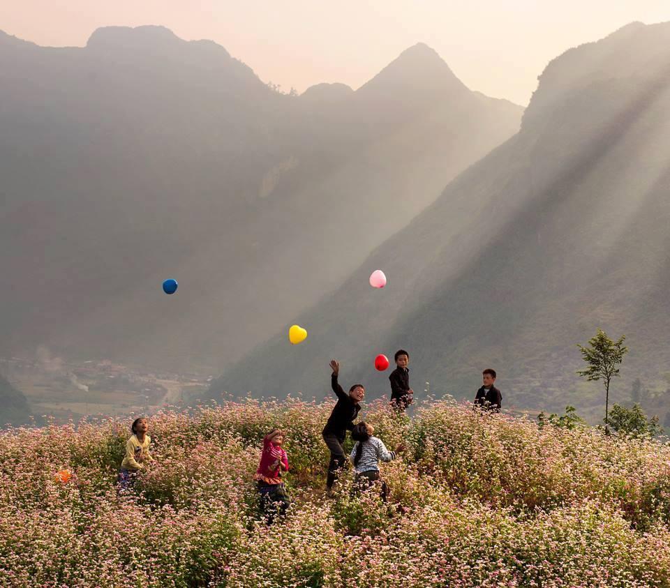 Du lịch Hà Giang- Các em bé nô đùa giữa rừng hoa tam giác mạch.Ảnh: Trần Bảo Hòa