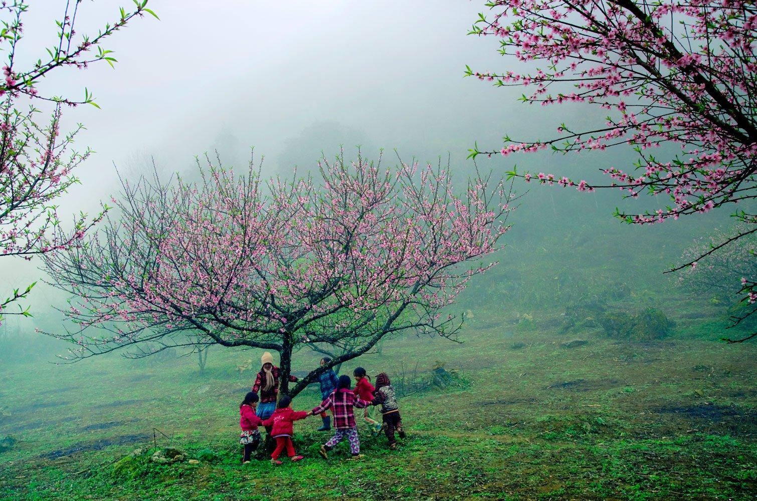 Du lịch Mộc Châu - Hoa đào nở vừa mang hơi thở rạo rực của mùa xuân. Ảnh Lê Huy