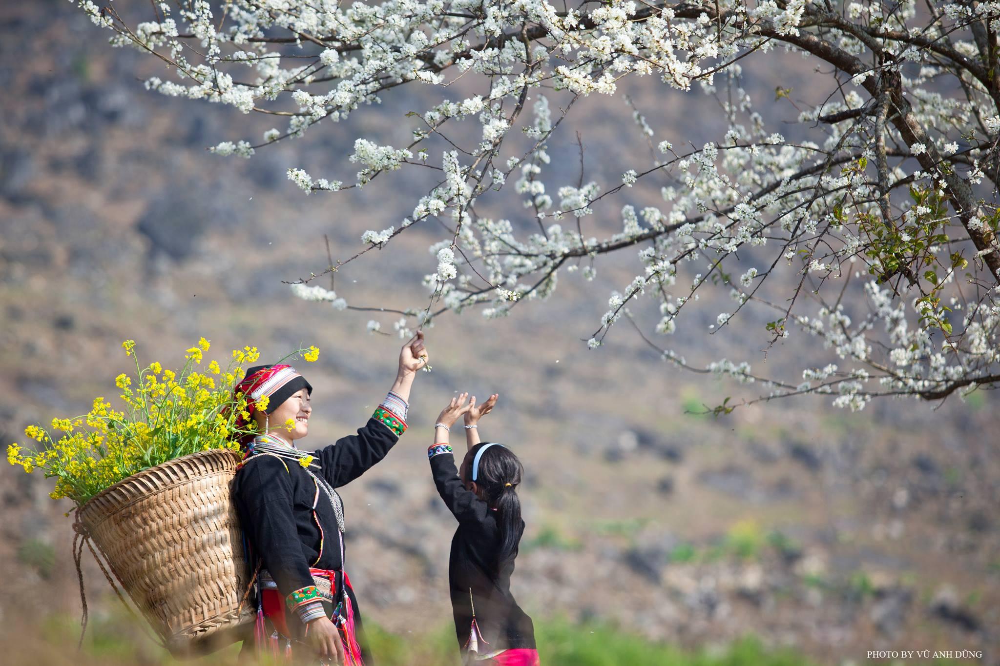 Du lịch Mộc Châu - Nhớ về một mùa hoa mận nở trắng xóa. Ảnh: Dũng Anh Vũ