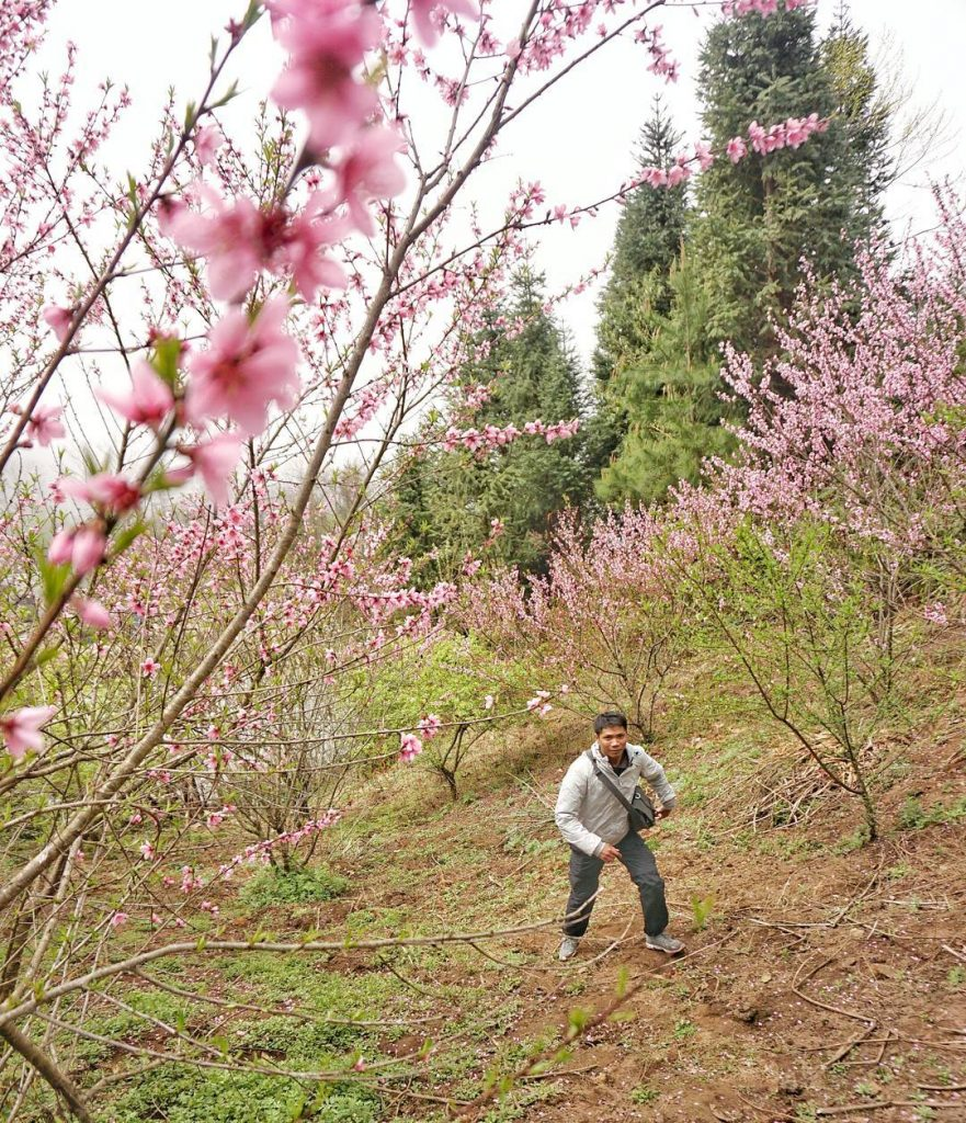 Y Ty- sapa travel- Lost in peach blossom garden in Y Ty. By: @nguyen.daido