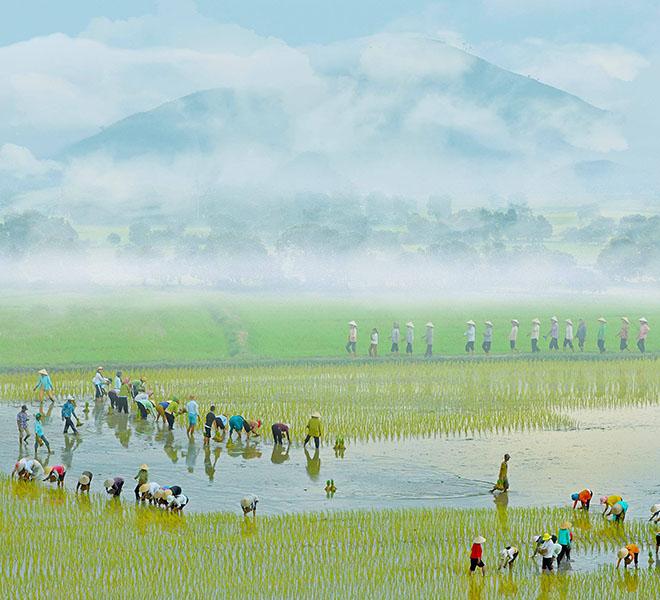 Du lịch miền nam- du lịch miền tây- cảnh đẹp miền tây-Mùa cấy lúa ở An Giang. Ảnh: Nguyễn Hoàng Nam