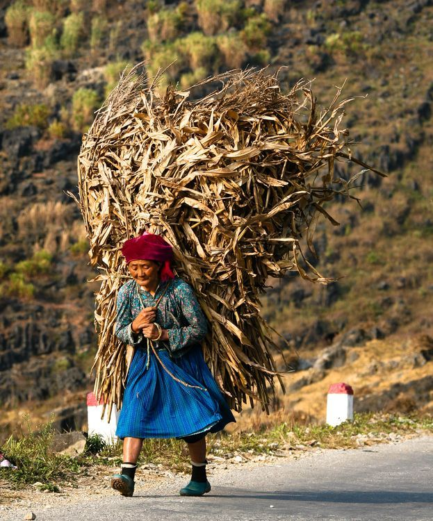 Du lịch vùng cao- Du lịch Tây Bắc- Cảnh đẹp Tây Bắc-Mùa thu hoạch ngô trên Hà Giang. Ảnh: Phạm Ngọc