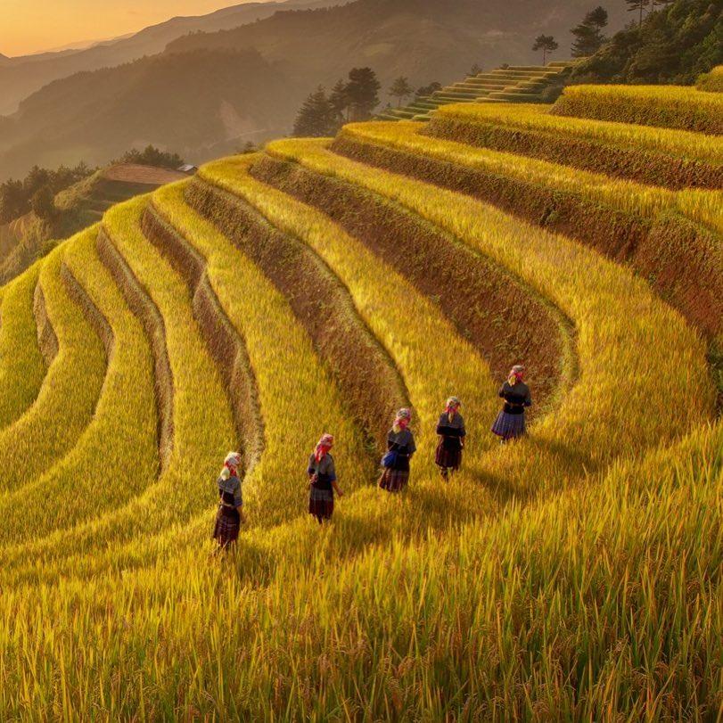 Du lịch vùng cao- Du lịch Tây Bắc- Cảnh đẹp Tây Bắc-Mù Cang Chải trong mùa lúa chín vàng. Ảnh: tamdovisual