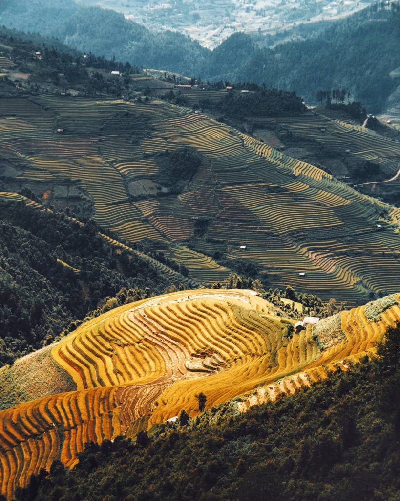 Highland travel- Northwest travel- the beauty of Vietnam-the terraced rice fields look like golden silk scarves flying over in the wind above green mountain slopes