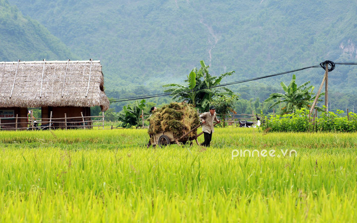 Du lịch Mai Châu - Cảnh đẹp Mai Châu - Cánh đồng lúa xanh hòa cùng những ngôi nhà tranh nơi bản Lác. Ảnh: pinnee
