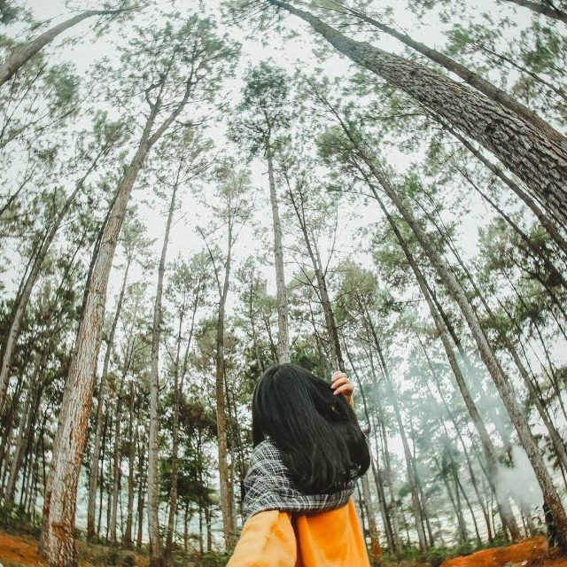"""Ha Giang travel- the most beautiful sights in Ha Giang-Yen Minh pine forest is """"Da Lat version 2"""" in the Northeast Homeland"""