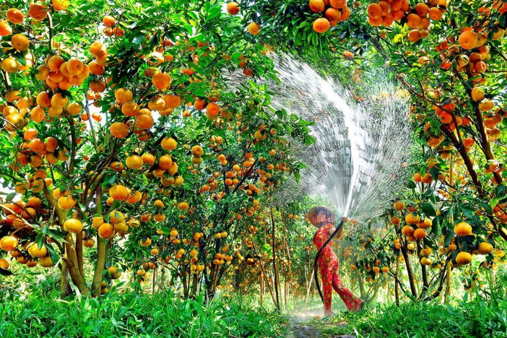 Southern Vietnam- Southern Vietnam travel- beautiful places in southern Vietnam-Fruit garden in Xeo Quyt, Dong Thap. By: Collection