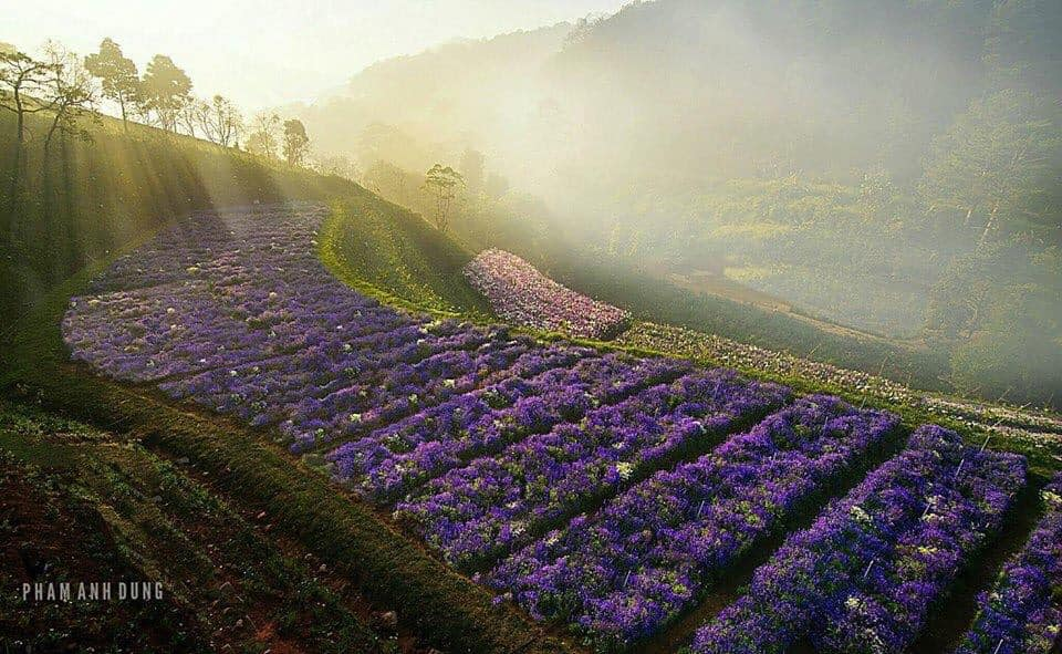 Visitors traveling Dalat often visit flower gardens to admire the beautiful flowers and hunt memorable photos. Da Lat Travel Guide