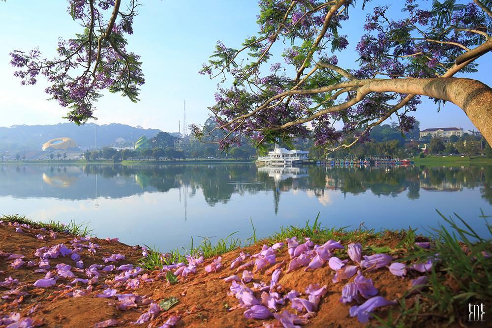 Dalat Travel Guide from A to Z- Da lat travel- beautiful sights in Dalat-Xuan Huong lake is so poetic in early morning. Photo: Đà Lạt Trong Tôi