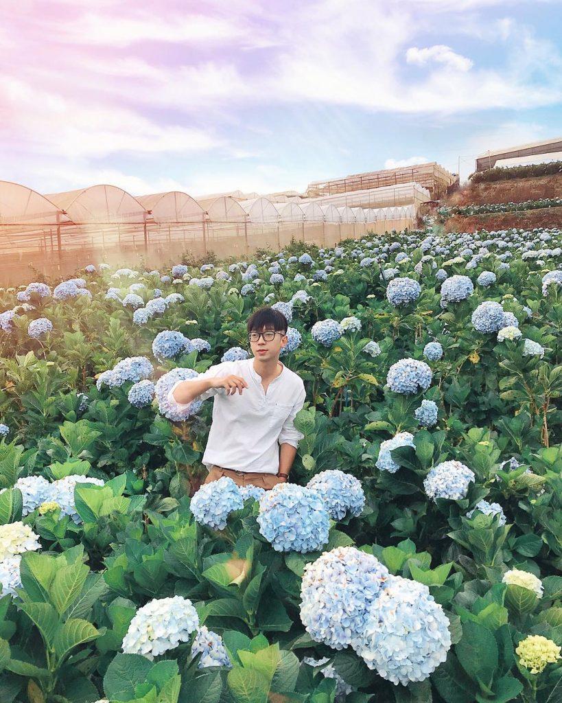 Visitors take photo inHydrangea flower garden. Photo : @ninheating