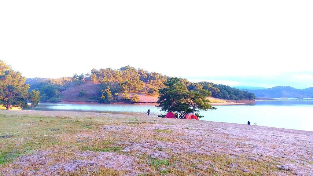 Pink grass season on Golden Stream Valley. Photo: Collection Da Lat Travel Guide