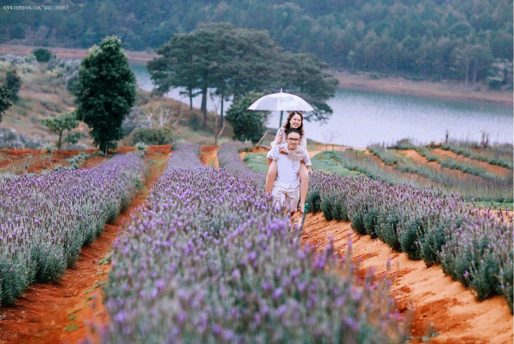 he brilliance of lavender against the Da Lat landscape. Photo: Đà Lạt Trong Tôi