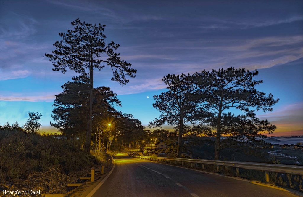Dalat Travel Guide from A to Z- Da lat travel-Poetic road in Dalat. Photo: Đà Lạt Trong Tôi.