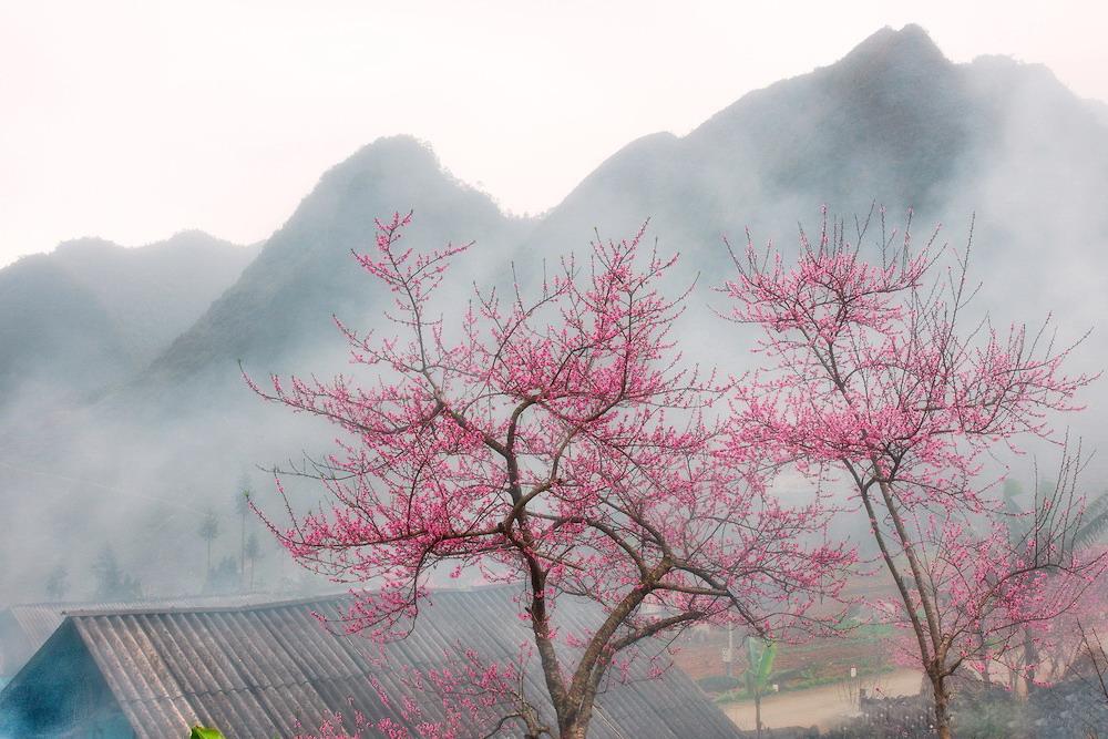 Màu hoa đào rực rỡ góc trời Hà Giang. Ảnh: @hoangnhiemphoto