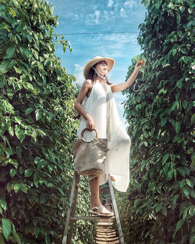 Vườn tiêu Khu Tượng được xem là vườn tiêu lớn nhất Phú Quốc. Ảnh: @linhdn92