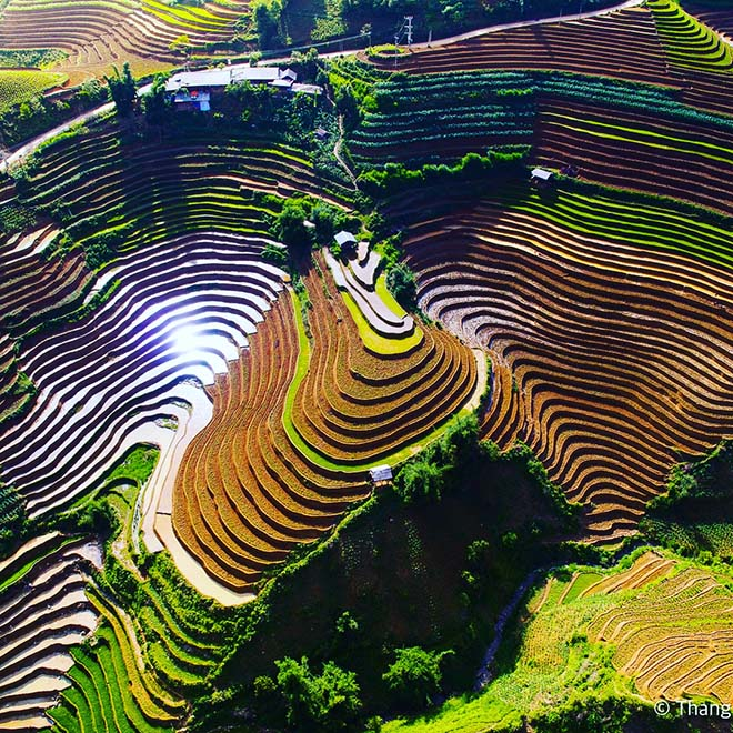 Hoang Su Phi's terraced fields in pouring water season. Photo: @thangsoi