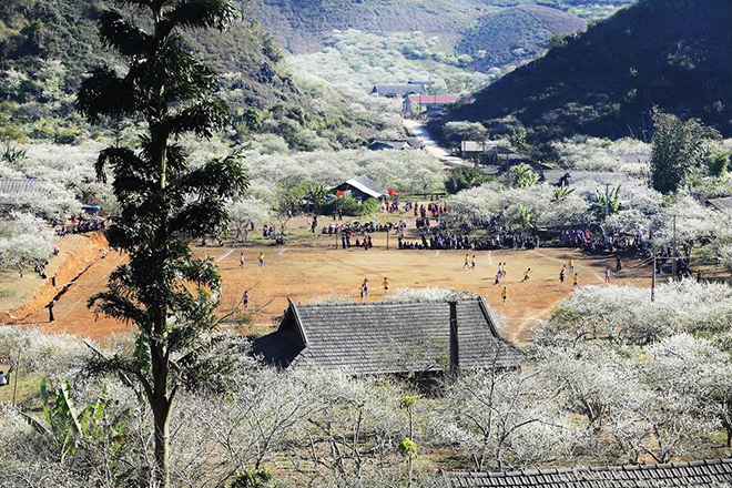 When the weather starts to warm up, the plum orchards in Moc Chau, flowering buds start popping up all mountain, creating a landscape lyrical, poetic and romantic. Photo: Collection