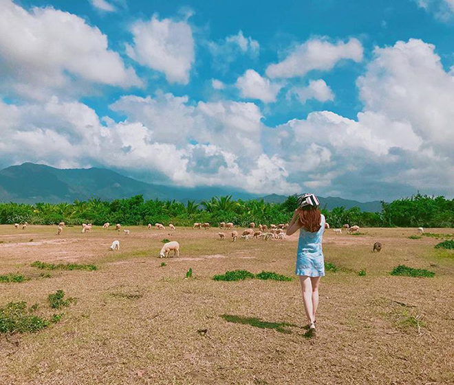 At An Hoa sheep field visitors can not only enjoy the pristine, natural scenery but also try being nomads herding sheep. Photo: @putathao