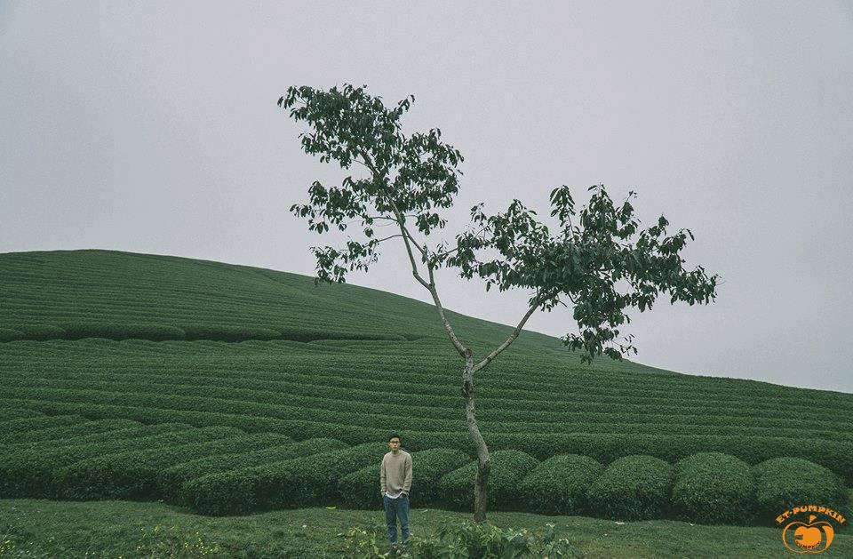 Những đồi chè Mộc Châu là đề tài nghệ thuật bất tận của các nhiếp ảnh gia. Ảnh: Minh Duc Tran
