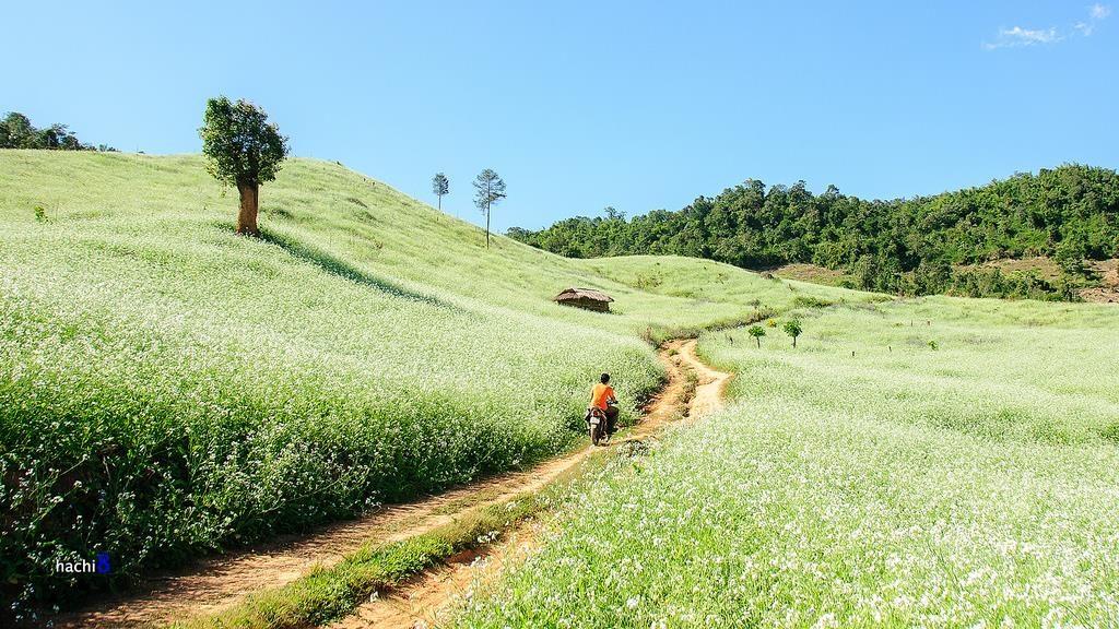 Những vườn cải xanh bao la, mang lại sức sống tinh khiết cho cao nguyên Mộc Châu. Ảnh: Ngô Huy Hòa